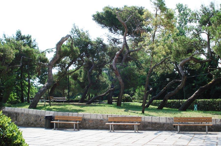Giardinaggio e potature Venezia - Azienda giardinaggio - Verde Ambiente giardineri